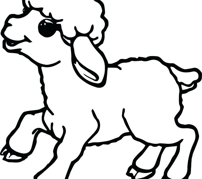 678x600 Sheep Coloring Pages Murs