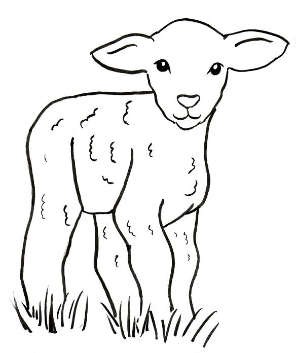 584x696 Sheep Drawing Easy