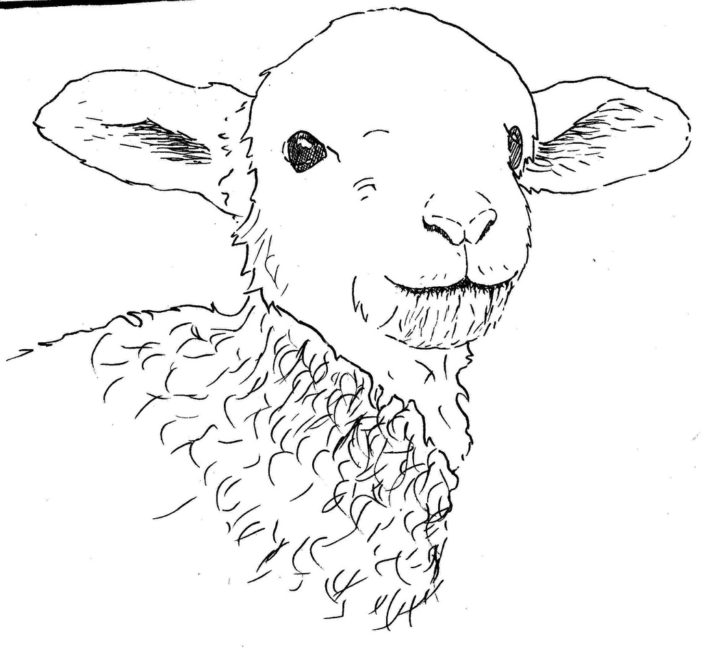 1024x948 Drawing Of A Lamb