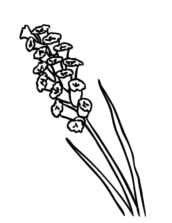 coloring pages of lavender - photo#28