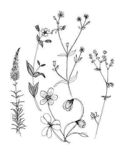 400x494 Wild Flowers. Wild Flowers, Flower And Tattoo