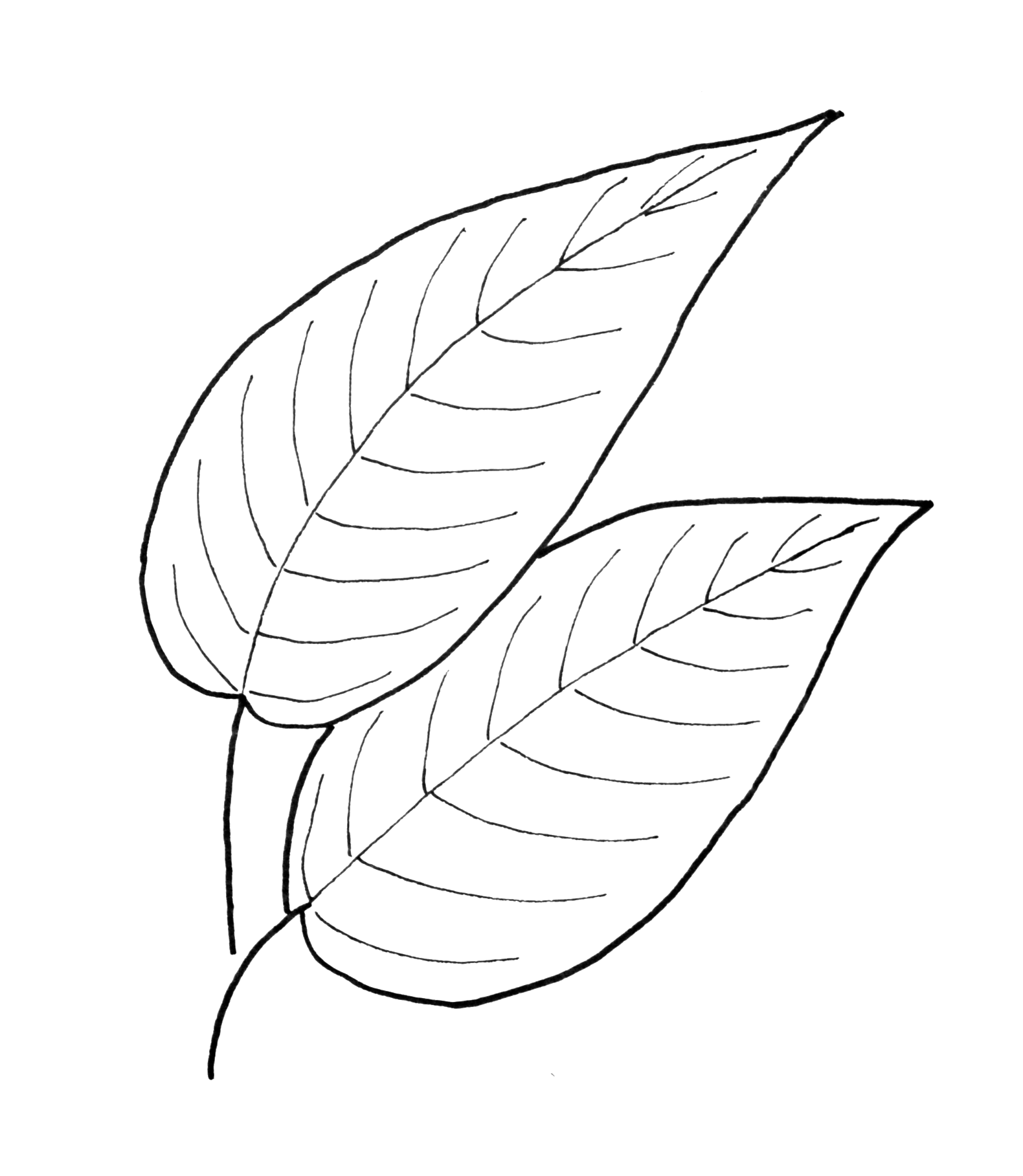 simple leaf drawing at getdrawings com free for personal use simple leaf drawing of your choice flower vine clip art pics flower vine clip art black and white