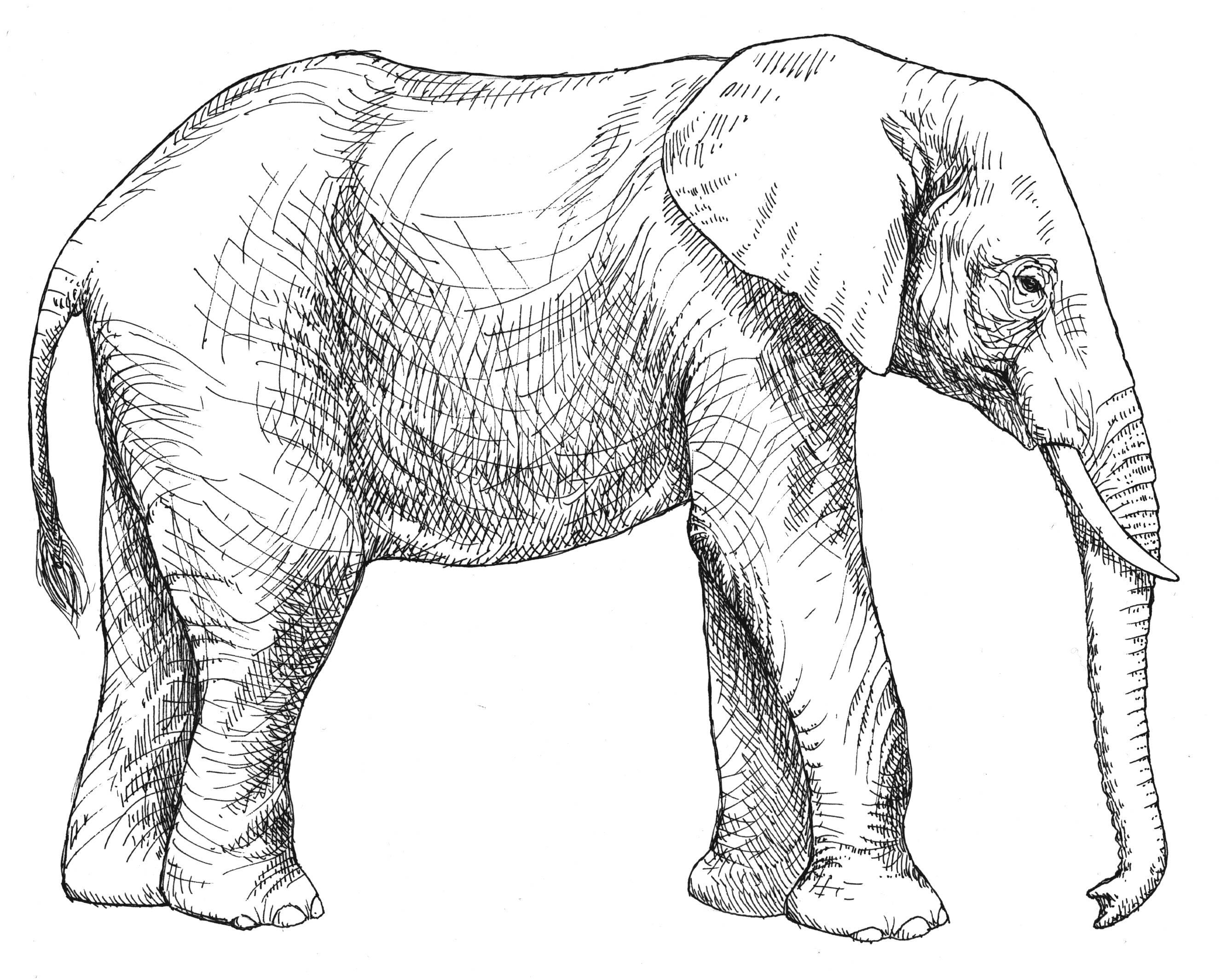 Simple Line Drawing Elephant