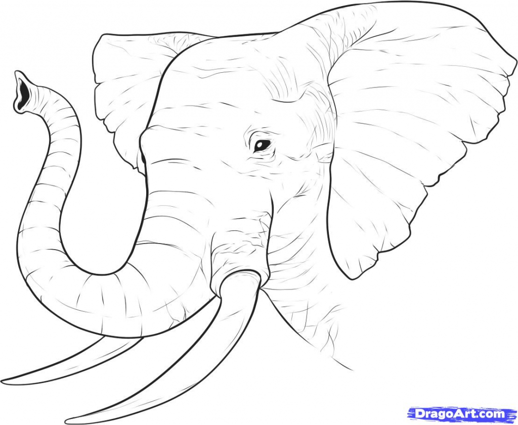 Simple Line Drawing Elephant At Getdrawings Com Free For