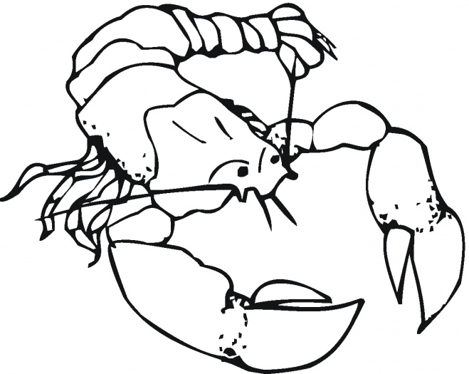 659x525 Lobster Outline Outline Of Lobster Clipart 4