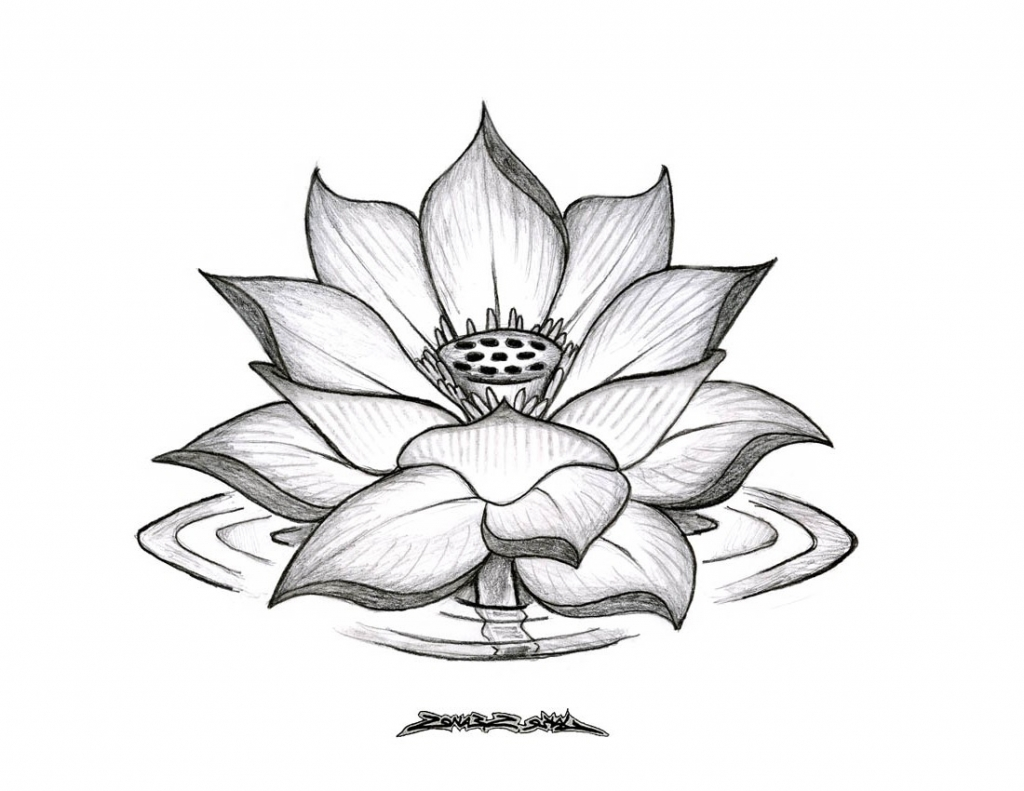 Simple Lotus Drawing At Getdrawingscom Free For Personal Use
