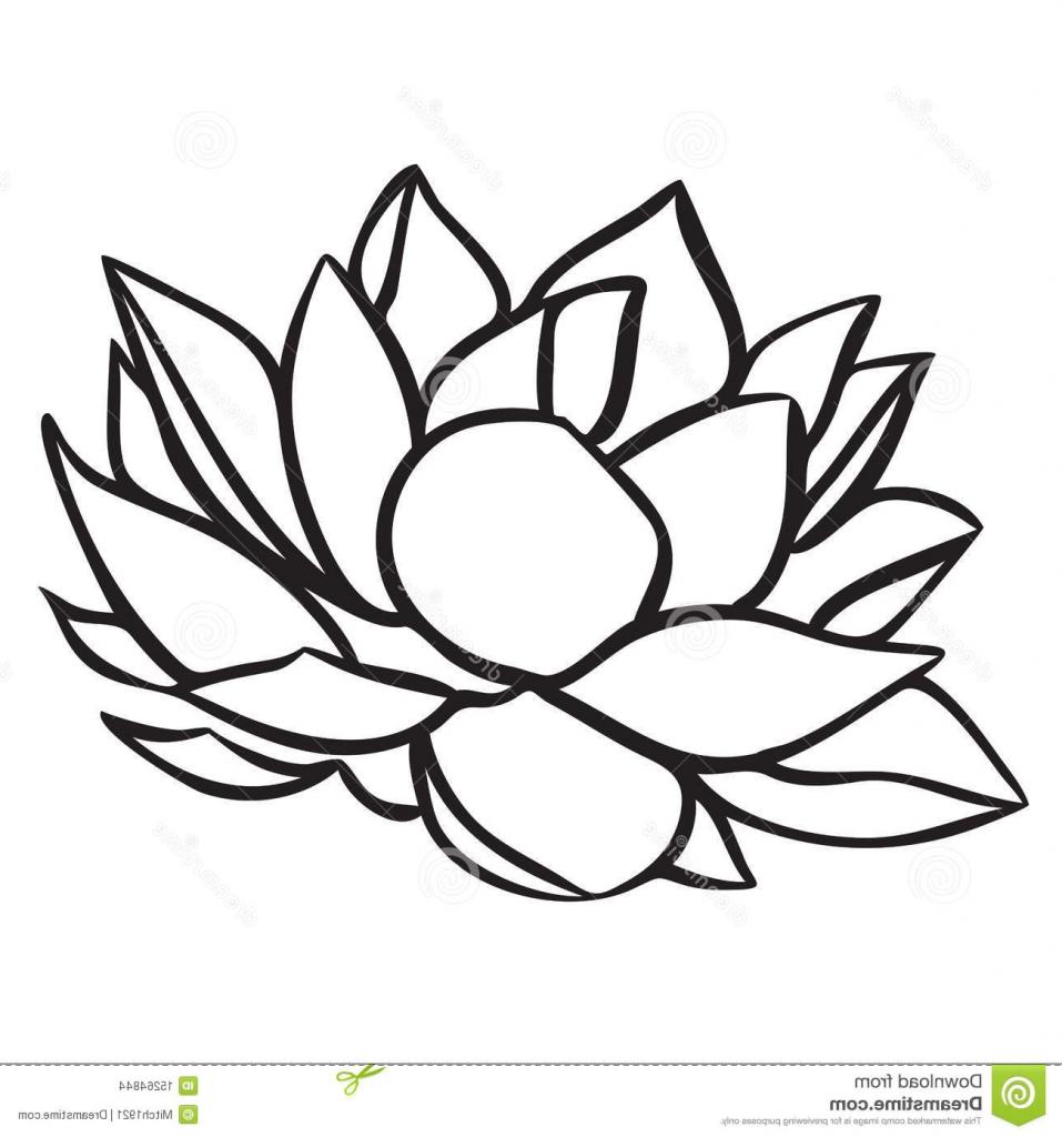 957x1024 Lotus Drawing Free Clip Arts Sanyangfrp