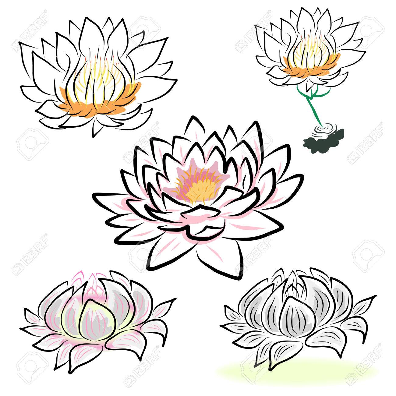 1300x1300 Lotus Drawing Stock Photos. Royalty Free Business Images