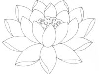 200x150 Lotus Flower Coloring Pages Awesome Simple Lotus Flower Drawing Hd