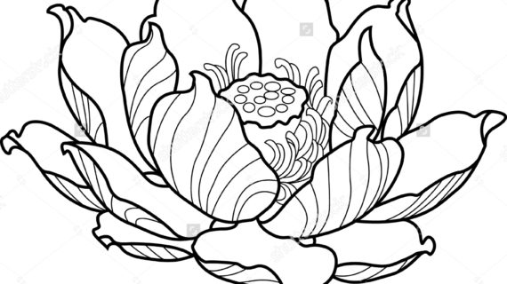 570x320 Lotus Flower Outline Drawing Best Ideas About Simple Flower