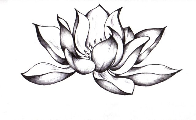 640x394 Lotus Flower Pictures Drawings Simple Lotus Flower Drawing Lotus