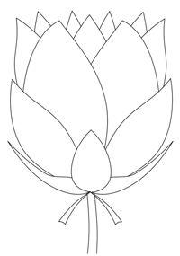 200x285 Simple Lotus Flower Drawing