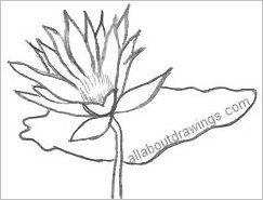 243x185 Simple Lotus Flower Outline