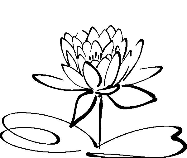 600x507 The Lotus Flower. Buds From Mud, Grows Into A Beautiful Flower