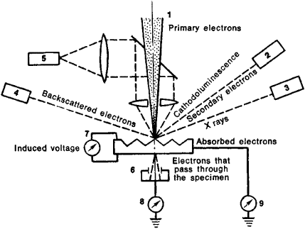 429x323 Electron Microscope Article About Electron Microscope By