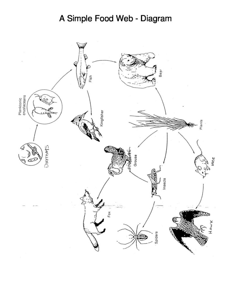 791x1024 A Simple Food Web