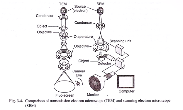 624x377 Transmission Electron Microscope (With Diagram)
