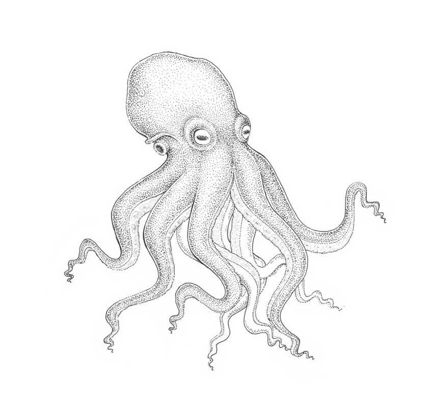 850x809 How To Draw An Octopus Step By Step