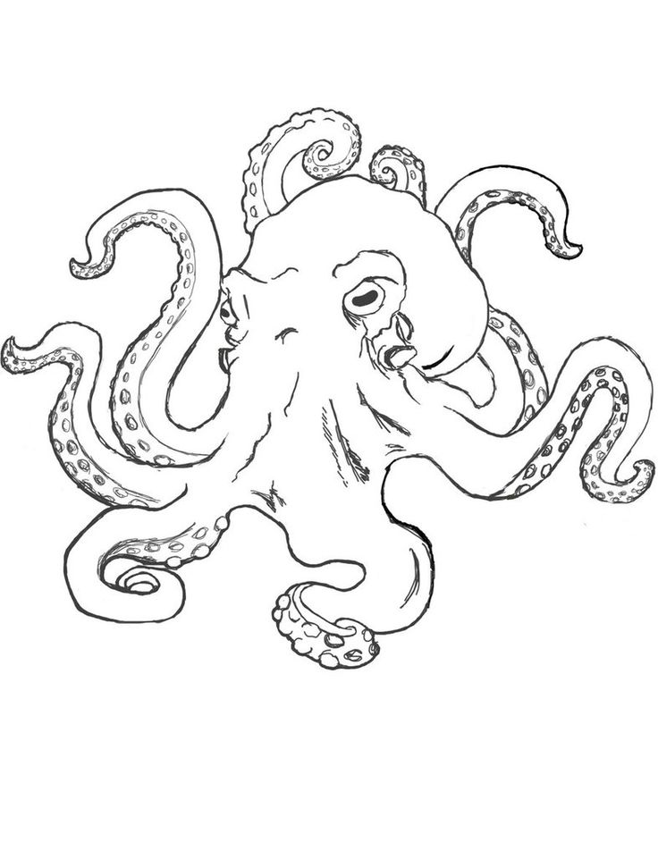 736x952 Image Result For Octopus Line Drawing Realistic Henna