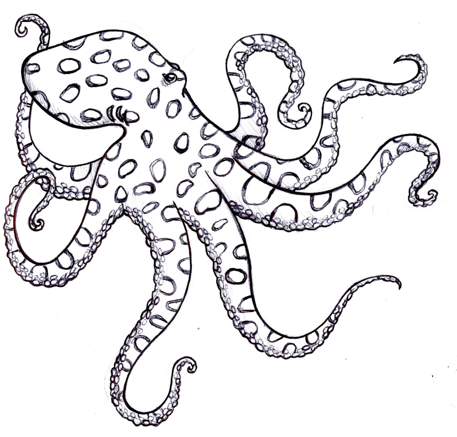 1600x1528 Black And White Octopus Drawing