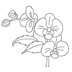 230x230 Orchid Flower Coloring Pages Detailed