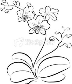 simple orchid drawing at getdrawingscom free for