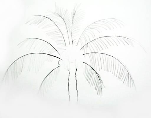 512x400 How To Draw A Coconut Palm Tree