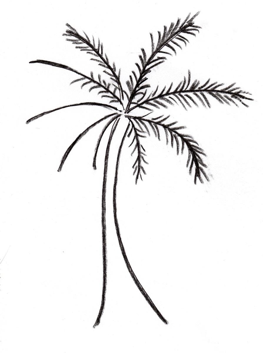 894x1200 Palm Tree Easy Drawing