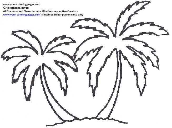 654x488 The Best Palm Tree Outline Ideas On Paper Palm