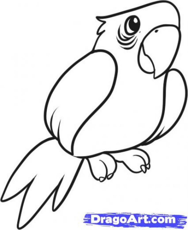 Simple Parrot Drawing At Getdrawings Com Free For Personal