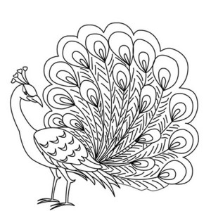 Simple Peacock Drawing