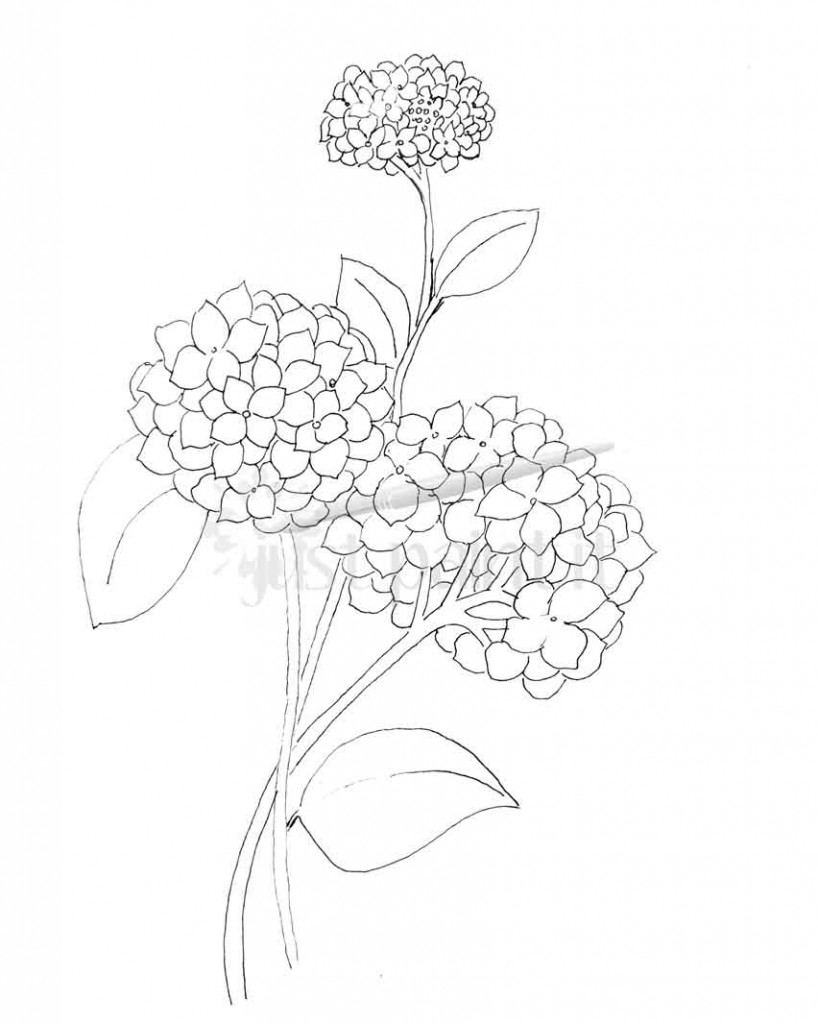 818x1024 Hydrangea And Peonies Coloring Pages
