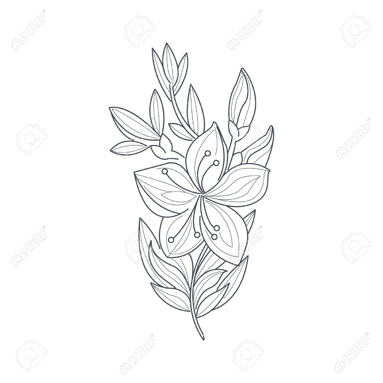 1300x1300 Jasmine Flower Monochrome Drawing For Coloring Book Hand Drawn