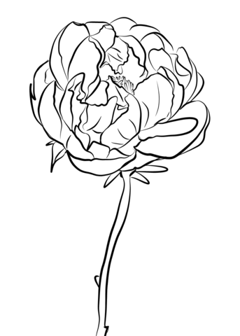 343x480 Peony Coloring Pages Free Coloring Pages