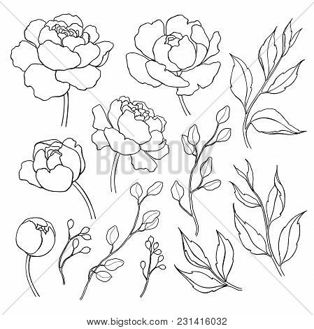449x470 Simple Flower Outline Images, Illustrations, Vectors