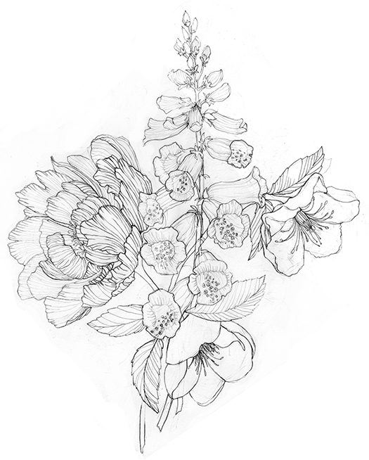 525x654 Stephanie Housley Peony Drawing Art And Illustration