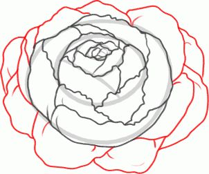 302x252 The Best Peony Drawing Ideas On Peonies Tattoo