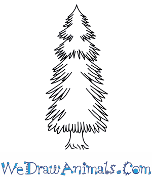 300x350 How To Draw A Spruce Tree