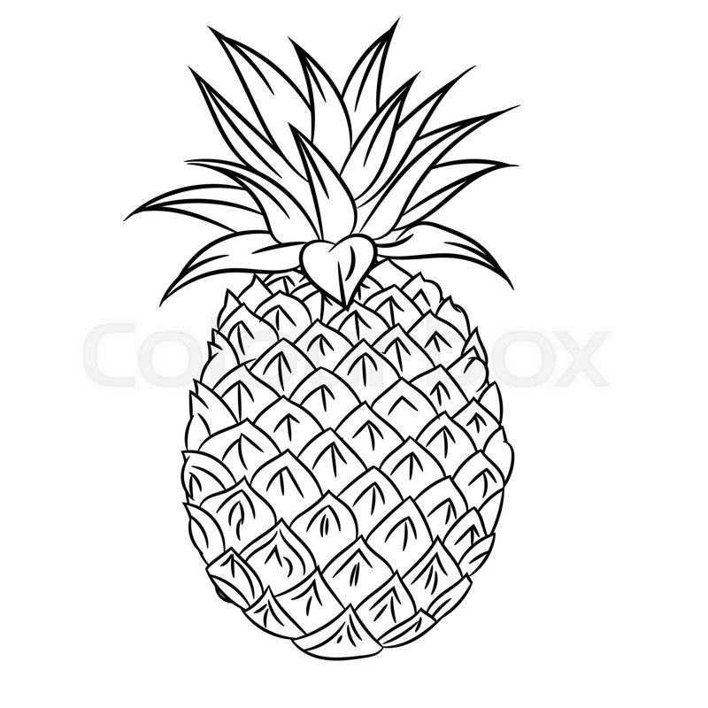 Simple Pineapple Drawing At Getdrawings Com Free For Personal Use