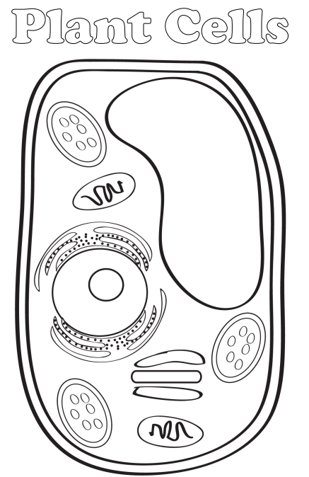 simple plant cell drawing at getdrawings com