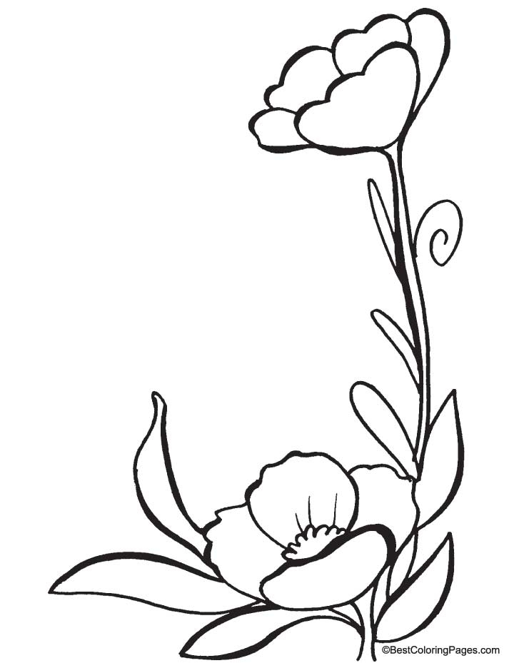720x936 Poppy Coloring Page To Print
