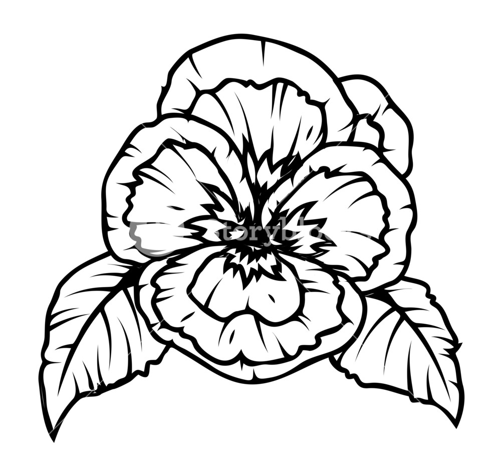 Simple Poppy Drawing At Getdrawings Free For Personal Use