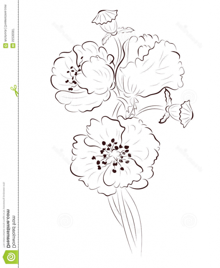 838x1024 Simple Poppy Drawing Poppy Lineart Stock Vector Image 55230287