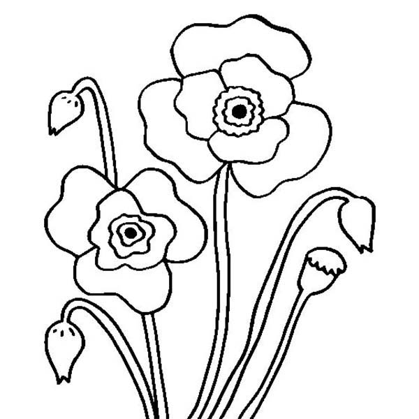 photograph regarding Poppies Printable named Very simple Poppy Drawing at  Absolutely free for unique