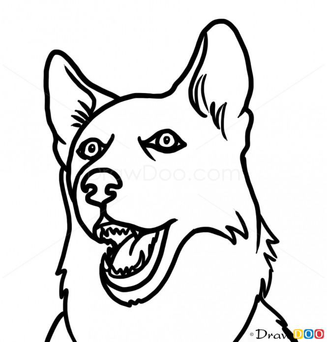 665x694 How To Draw Husky Face, Dogs And Puppies Wolf Things