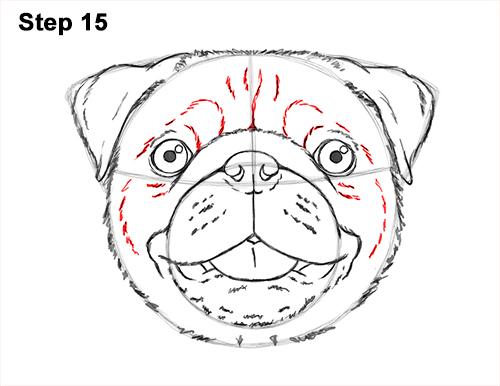 500x386 Pug Head Drawing Pug Head Drawing Ez