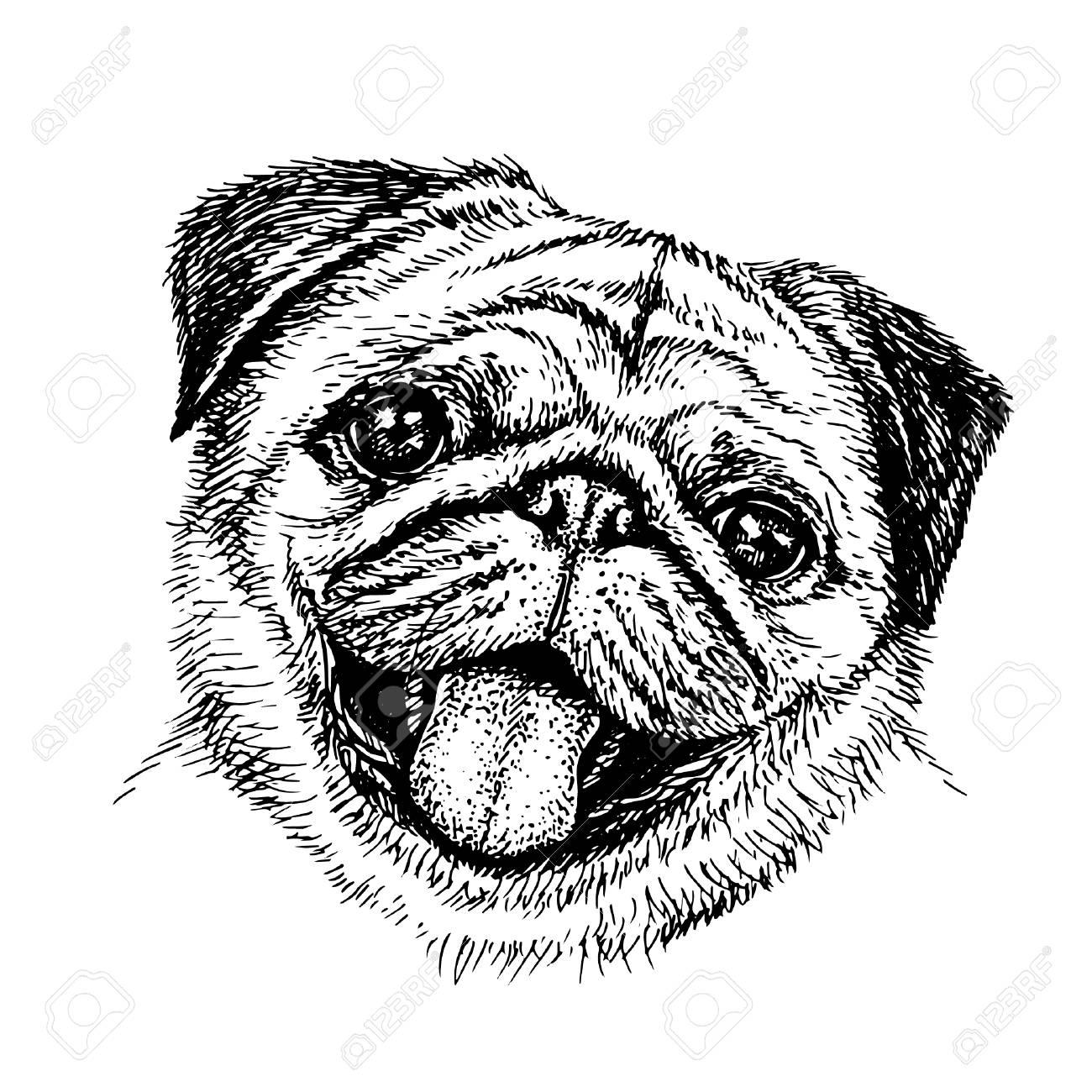 1300x1300 Sketch Dog Cute Pug Illustration. Royalty Free Cliparts, Vectors