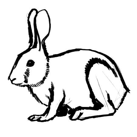 451x451 How To Draw A Rabbit