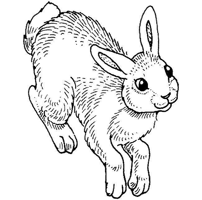 650x642 Rabbit Template