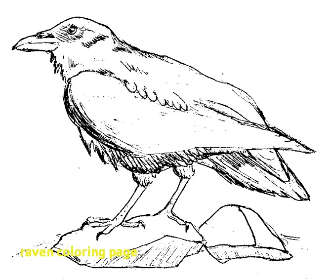 670x567 Raven Coloring Page With Ravens Coloring Pages Free Simple Raven